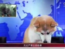 《洛奇英雄传》年终回顾 猫狗主播激萌出镜