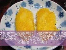 吃剩的芒果核别扔,它能变成你意想不到的样子