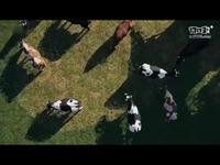 《模拟农场19》全新实机演示 加入新动物马匹